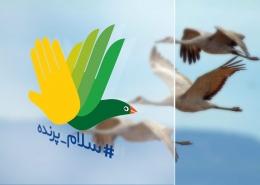 #سلام_پرنده