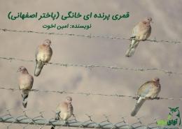 پاختر پرنده اصفهانی