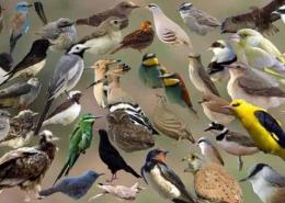 پرندگان اصفهان