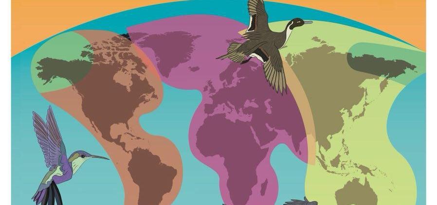 روز جهانی پرندگان مهاجر 2018