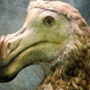 انقراض پرندگان , پرنده های در معرض انقراض