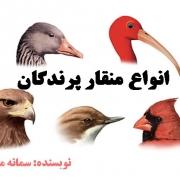 منقار پرندگان