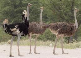 بزرگ ترین پرنده ی جهان