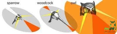 حس بینایی در پرندگان