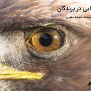 حس بینایی پرندگان