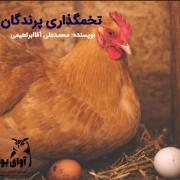 فصل تخمگذاری پرندگان