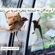 برخورد پرندگان با شیشه
