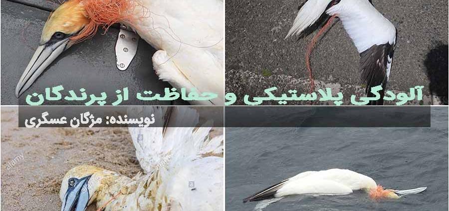 حفاظت پرندگان