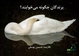 خواب پرندگان