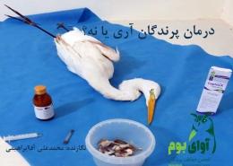 درمان پرندگان