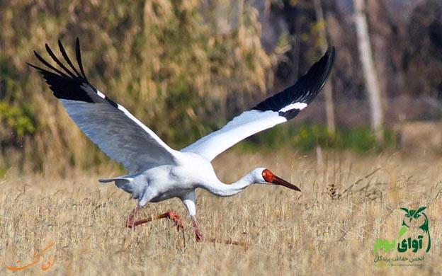 پرندگان کمیباب ایران