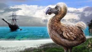 دودو dodo