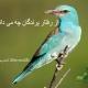 رفتار پرندگان