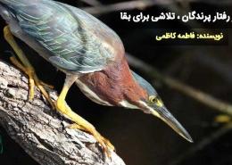 رفتار های پرندگان