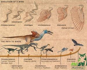 سیر تکامل پرندگان