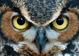 قدرت بینایی پرندگان