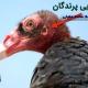 حس شنوایی پرندگان