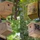 birds nest box in isfahan