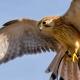 واحد شمارش پرنده شکاری و واحد شمارش پرندگان