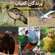 پرندگان کمیاب ایران