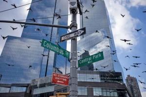پرندگان شهری