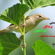 تنوع زیستی پرندگان شهر اصفهان