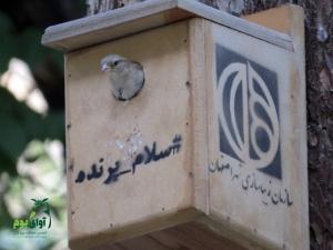 لونه پرنده اصفهان پارک