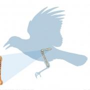 عکس اسکلت پرندگان