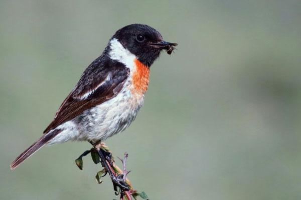 انجمن پرنده شناسان آوای بوم