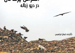 انقراض پرندگان در دپو زباله