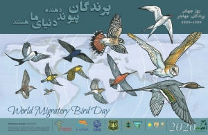 روز جهانی پرندگان مهاجر