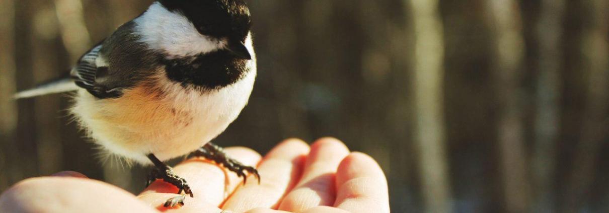 بویایی پرندگان