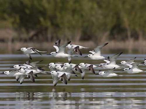 مهاجرت پرندگان و پرندگان مهاجر و دلایل مهاجرت