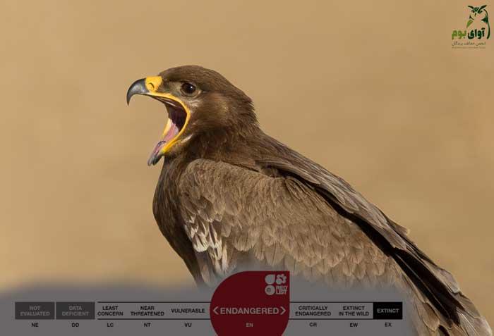 عقاب استپی