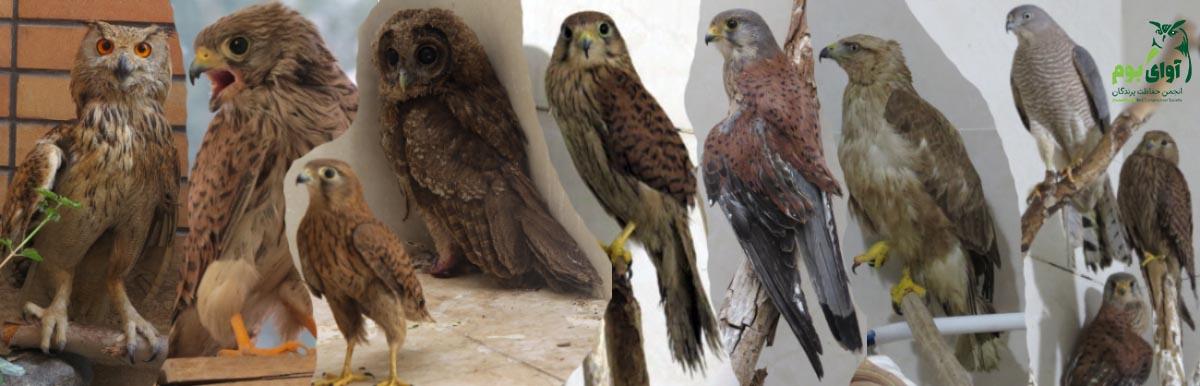 پرندگان آسیب دیده