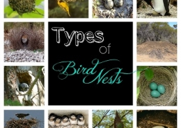 انواع لانه پرنده ها